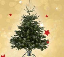1 Sapin de Noël acheté chez Castorama = 15€ en bon d'achat