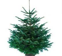 Sapin de Noël Ikéa 2016 = Bon d'achat de 20€